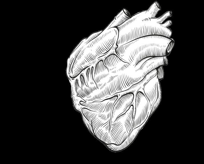 frischblut-werbeagentur-linz-headerbild-arterie-herz